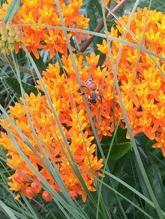 Bee Friendler by Cascadian Farm