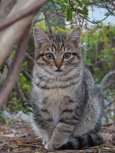 Poised and posed Animals And Pets, Funny Animals, Cute Animals, Cute Cats And Kittens, Kittens Cutest, Beautiful Cats, Animals Beautiful, Ugly Cat, Animal Gato