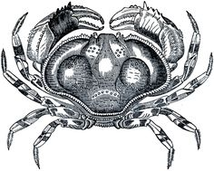 50+nautical+images+the+graphic+fairy | Free Public Domain Crab Image!