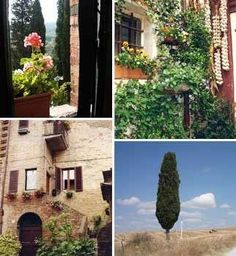 Workaway in Italy. Help us in our vineyard, gardens, olive grove and tours in beautiful Tuscany, Italy