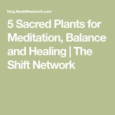 5 Sacred Plants for Meditation, Balance and Healing | The Shift Network