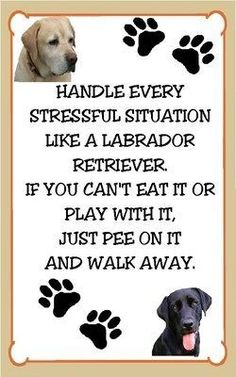 Labrador Retriever Stressful Situation Funny Refridgerator Magnet