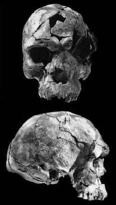 Herto skull