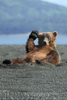 #bear- what an adorable shot!
