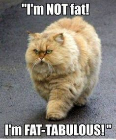 Random Funny Pictures (18 Pics) Fat Cat