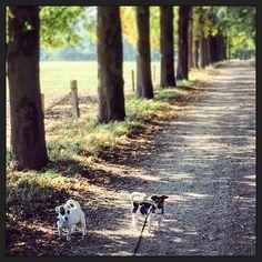 Wandelen... ;-) #myview #puppyspam #puppyEhkä #blijehond