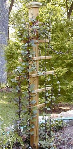 A great trellis idea for climbing vines! this would look great with a bird house on top of post!