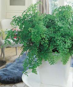 Die 8 besten Bilder von Pflanzen für schattige Plätze im ...