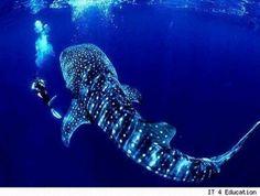 Real life sea monsters - AntaresOnline.com