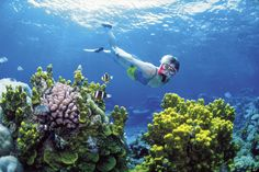 We wanted to share some of things our children will lose because of global warming.   Coral reefs, which are an invaluable part of marine ecosystems and tourism economies, are threatened by ocean warming and acidification, which is a result of releasing CO2 into the atmosphere.