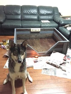 "We adopted a dog from the Humane Society a month ago. She is a beagle / german shepherd mix. Before we even got a dog my husband made the rule ""no dogs on the bed."" So I knew I had to make her the coolest bed… Rustic Dog Beds, Pallet Dog Beds, Wood Pallet Recycling, Dog Beds For Small Dogs, German Shepherd Mix, Diy Dog Bed, Gentle Giant, Diy Pallet Projects, Cool Beds"