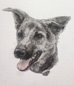 Shelby the soi dog by Erin Donaldson 2015.