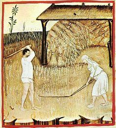 Piantagione di grano - Tacuinum sanitatis Casanatense (XIV secolo)