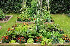 来年はこんなふうに家庭菜園も美しくしたいなー!next year!