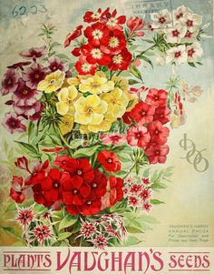 seeds illustrated / Vaughan's Seed Company :: Nursery and Seed Catalogs Vintage Ephemera, Vintage Cards, Vintage Labels, Vintage Postcards, Botanical Illustration, Botanical Prints, Vintage Gardening, Organic Gardening, Gardening Blogs