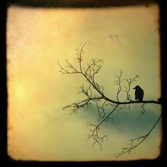 Solitude Mood Photograph - Solitude Mood Fine Art Print - Gothic And Crows Art Photography