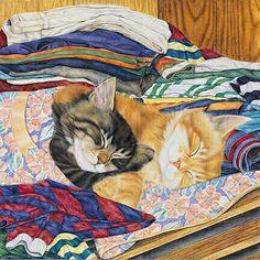gatti dormono sul bucato