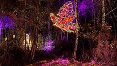 Zoo Lights: the phenomenon that turns zoos – and other wildlife spaces! - into visitor attractions at night Wildlife Tourism, Zoo Lights, Light Trails, Zoos, Time Art, After Dark, Natural World, Night Time, Attraction