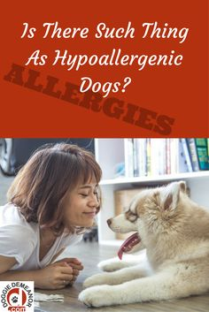 What can I do to help my dog allergy? Find out the TRUTH about hypoallergenic dogs. Find out here, and view breed listing. Big Dog Little Dog, Big Dogs, Hypoallergenic Dog Breed, Puppies Tips, Dog Information, Dog Treat Recipes, Training Tips, Dog Owners, Dog Treats