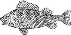 Image result for fish illustration