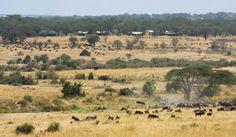 Olakira Camp > Serengeti National Park > Northern Tanzania