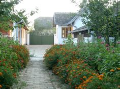 Country house in Vojvodina