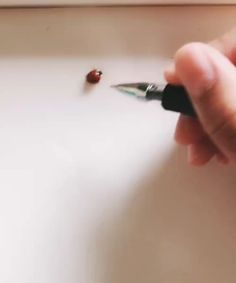 The chemical odor of the ink in ballpoint pen attracts the ladybug and it lays down a pheromone trail that others can smell and follow.
