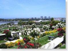 Corona Del Mar CA Buy Sell Plots Lots Graves Burial Spaces Crypts Niches Cemetery Property for Sale Memorial Park, Newport, Cemetery, Property For Sale, Lawn, Dolores Park, Space, Plants, David