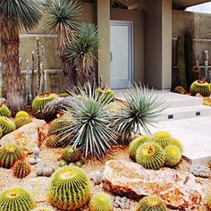 Striking & Sculptural: Southern California's rare rains provide the only water that this front yard gets. Yet its barrel and columnar cactus, Mexican blue fan palms, and Yucca rostrata all thrive. Arranged among boulders in randomly spaced groups like pieces of art, the plants grow in a decomposed granite–cactus mix blend, top-dressed with 3/8-inch Palm Springs Gold gravel.