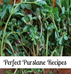 Perfect Purslane Recipes