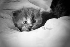 Look by mayat-s on DeviantArt Cats And Kittens, Funny Cats, Kitty, Deviantart, Doggies, Artist, Cute, Nature, Animals
