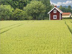 """Bild von Gunter Kirsch - """"Typisches rotes Holzhaus in Schweden"""""""