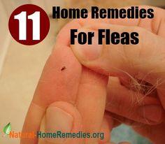 remedies for fleas