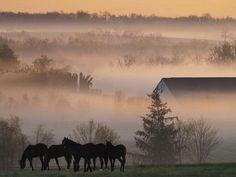 Les fonds d'écran - Des chevaux en liberté dans la brume