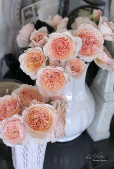 rose kizuna
