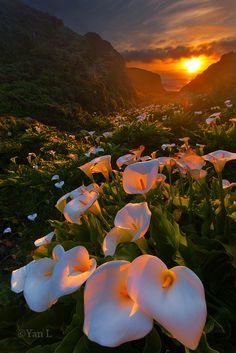 Sunset in Calla Lily Valley, Big Sur, California, United States