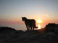 Su Pallosu,  Comune di San Vero Milis (Oristano) - Sardegna By: http://www.gattisupallosu.org/