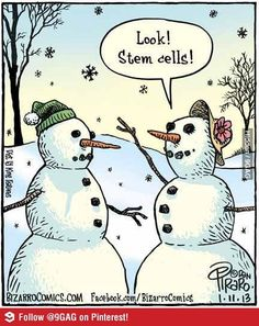 Look! Stem cells!