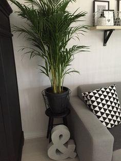 Binnenkijken bij jennies_place - Big palm