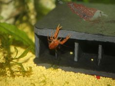 Höhle für CPO -  Aquarium Deko Haus Versteck Natur Schiefer