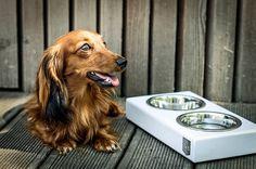 Bowl and Bone | Bowl & Bone Republic oferuje różnego rodzaju akcesoria dla psów. W sklepie internetowym znajdują się między innymi ubranka,…