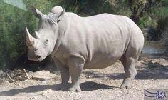 صيادون غير شرعيين يقتلون وحيد قرن نادرًا: ذكر أحد مسؤولي الحياة البرية أن صيادين غير شرعيين قتلوا وحيد قرن نادراً، في أول عملية قتل للحيوان…