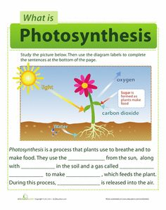 Worksheets: Photosynthesis for Kids