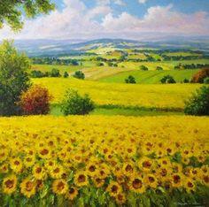 Tuscany Field Of Sunflowers Near Pienza Tuscany