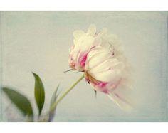 Peony Print, Flower Still Life, Floral Art Print, White Pink Peony Photo,  Botanical Wall Decor