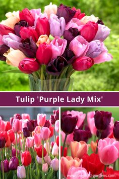 267 best spring blooming bulbs images on pinterest bloom bulb and