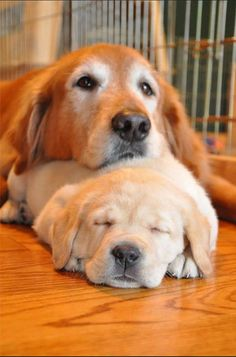 Shhh, puppy nap time!