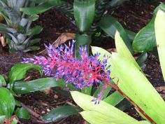 Bird Photos, Birding Sites, Bird Information: SOME BEAUTIFUL FLOWERS, NAPLES BOTANICAL GARDEN, N...