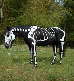 Horse Costumes, Halloween Costumes, Halloween Party, Friendship Love, Natural Horsemanship, Black Moon, Photo Competition, Horse Photos, Goth Girls