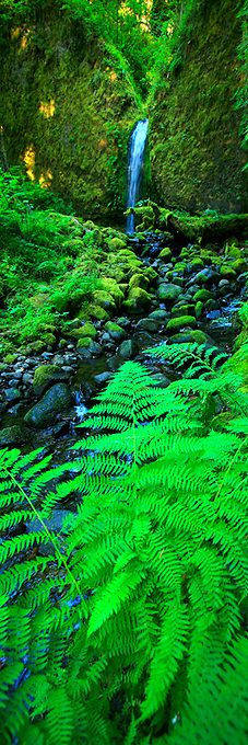 """""""Fern Falls"""" Columbia River Gorge, Oregon. Need to go here. Now."""